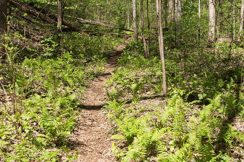 Pinnacle Mountain Falls trail - 3
