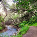Small photo of Alum Rock Park, San Jose, CA