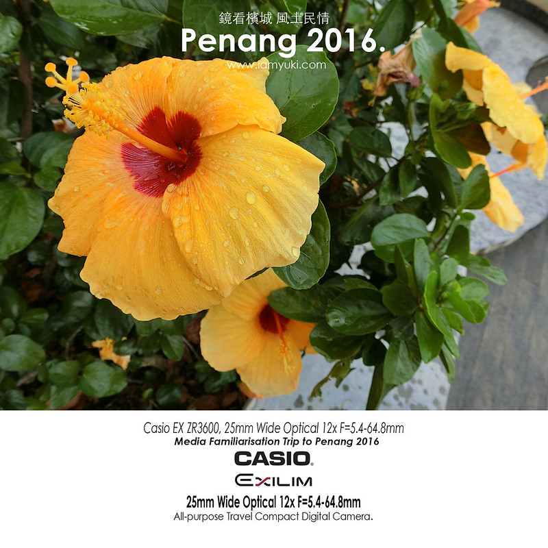 casio artwork_penang hill_flowers