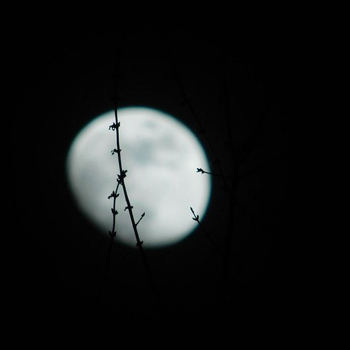 A study in moonlight III #moon