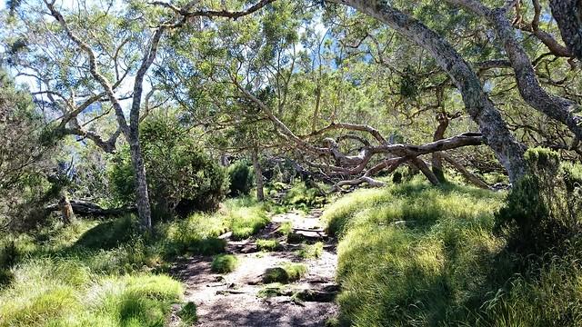les tamarins forest mafate reunion island