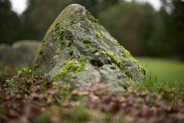 craggy moss mountain