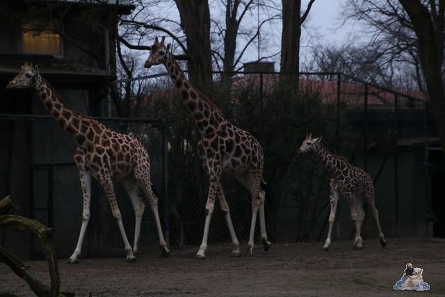 Tierpark Hagenbeck 02.01.2015   38