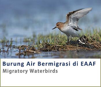 Migratory waterbirds-ID