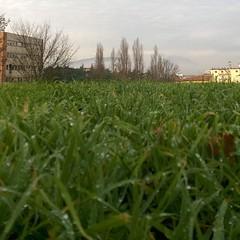 #shotonmylumia #shotonlumia #lumia735 #thelumians #nofilter #green #tree #trees #garden #ontheground #fromthebottom #nature #winter #sky #bluesky #town #city #cityscape #perspective #macro #nature_brilliance #vivonatura #macro_brilliance #scopriamobeneven