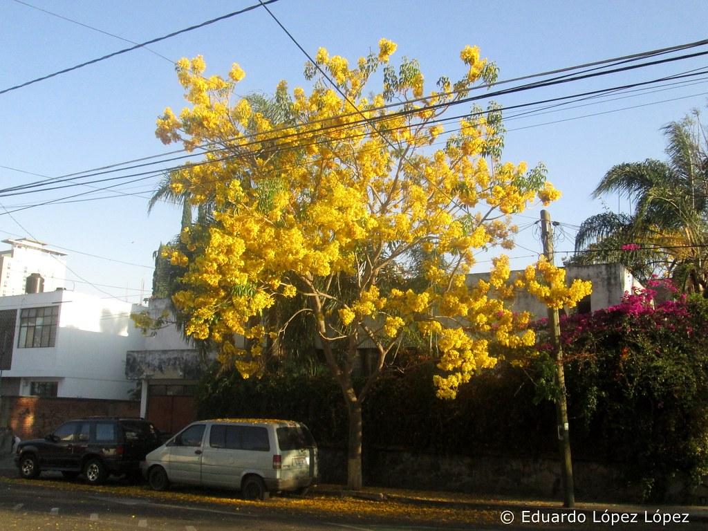 Las colonias 06/03/2016