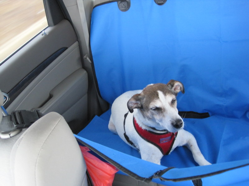 dog seat cover 05