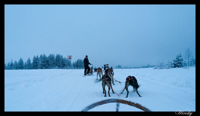 Paseo en huskies