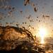 Sun Splash by wentloog