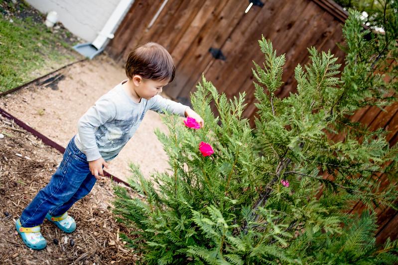 cute & little blog | dylan decorate fir tree