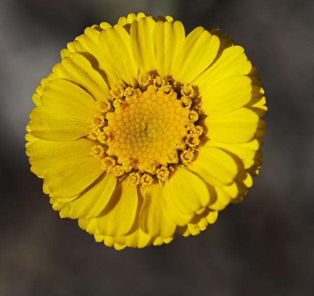 Wild Flower 1_7d1__010416