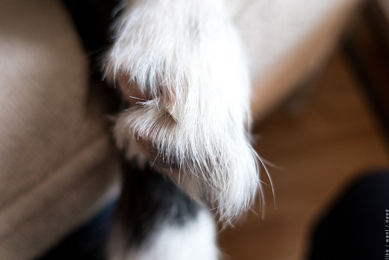 Little Paw