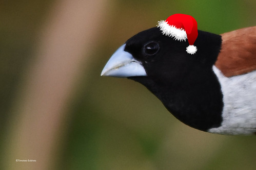 ¡Feliz Navidad para todos y todas!