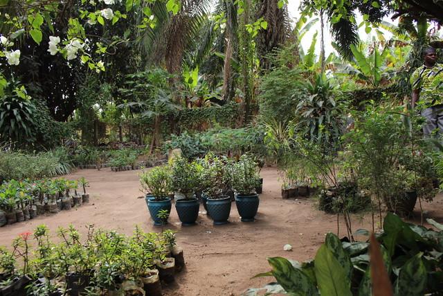 Ho Botanical Garden - potted plants