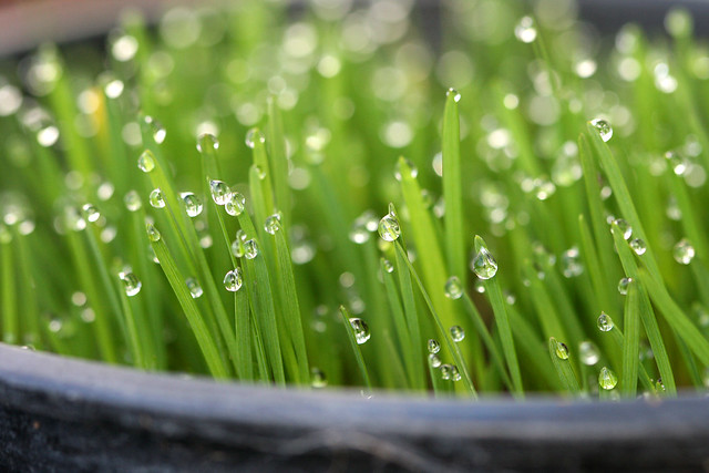 Seedlings with dew