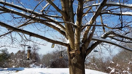 Winter Wonderland, snow in New England ©LapdogCreations