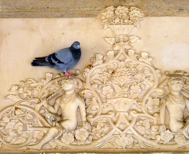 A rather decorative pigeon on the carved marble wall of the Mausoleum in Jaipur, India