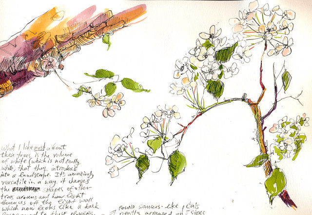 Sketchbook #94: Blooming Trees