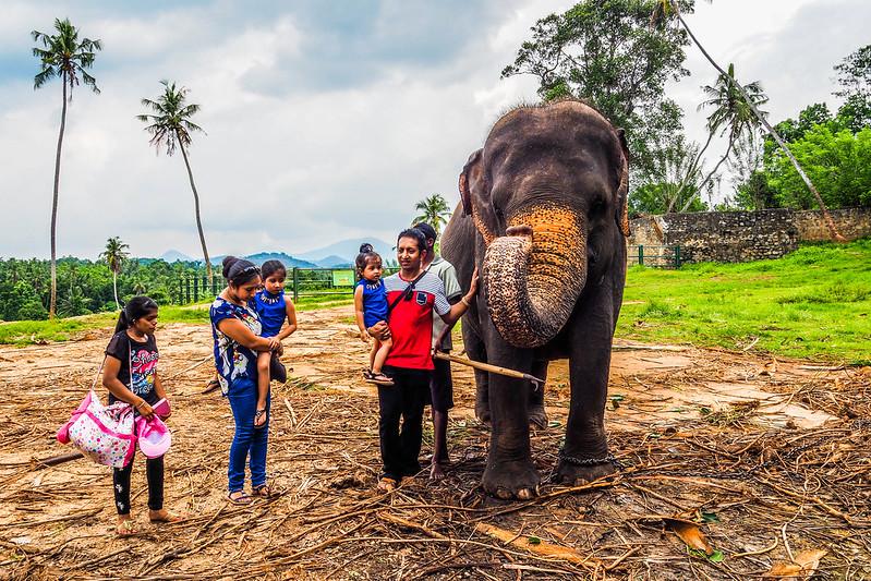 P4193397 Vagamundos 16 Sri Lanka Orfanato Elefantes Pinnawala