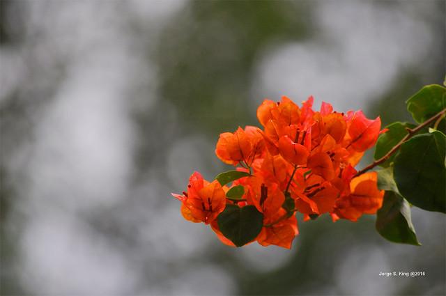 Santa Rita naranja
