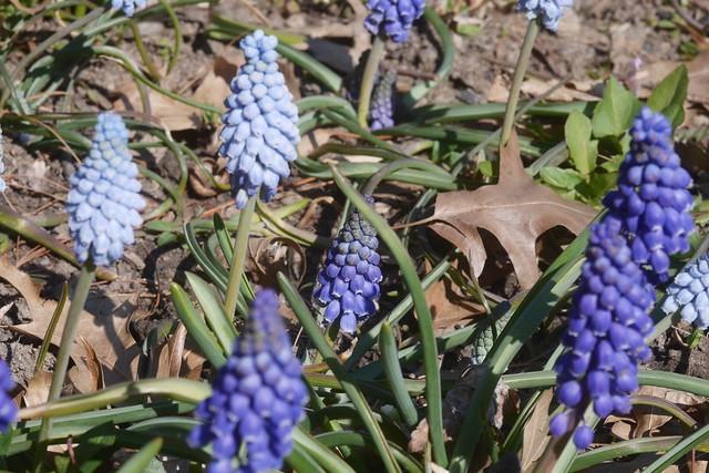 土, 2016-03-26 14:30 - Brooklyn Botanic Garden