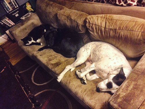 Two Dogs and a Cat (April 14 2015)