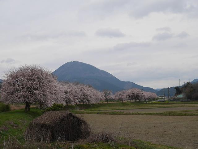 Photo:P1240370 By sukitamba