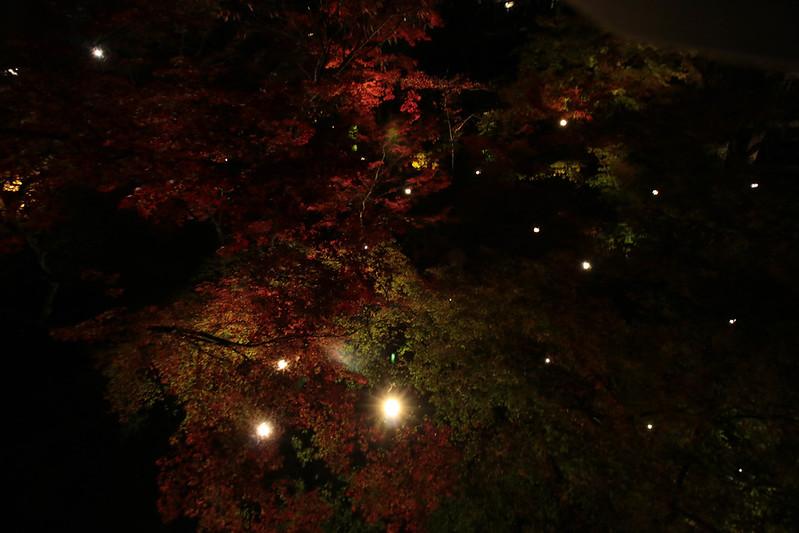 20141122-武奈ヶ岳&京都ライトアップ-0781.jpg