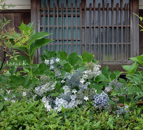 京都哲學之道2