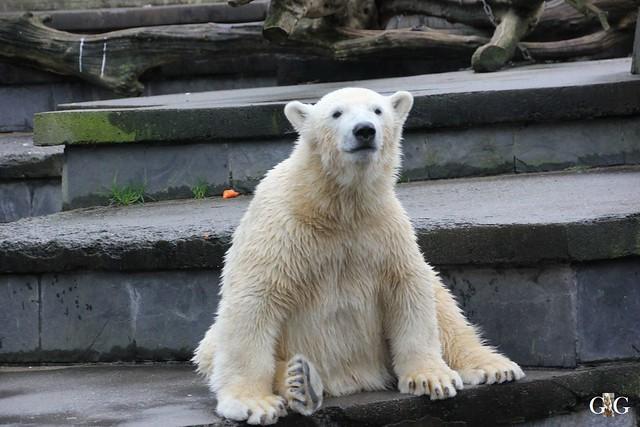 Besuch Zoo Rostock 29.12.201536