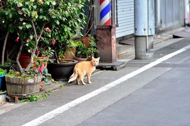 Tsukiji_cat_01
