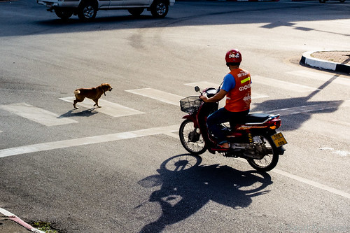 street morning light urban orange dog motion walking thailand moving crossing shadows taxi sony helmet motorbike biking motorcycle intersection m3 zebracrossing trang rx100 ramavi kantang