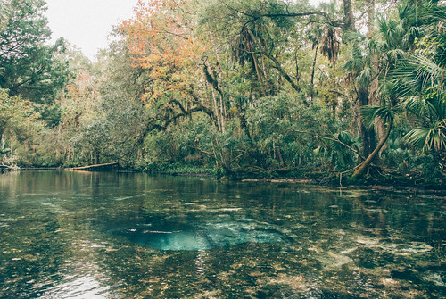 wild nature water misty swimming vintage river landscape spring florida cloudy kayaking ethereal mystical paddling sevensisters chaz muted suncoast 7sisters nikon1 mirrorless thechaz naturecoast chassahowitzka vsco springhunters sevensistersspring