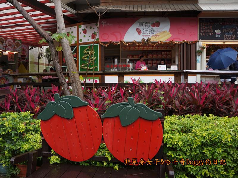 苗栗草莓大湖酒莊清安洗水坑豆腐街14