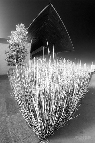 park street plants white abstract black cold building tree architecture garden blackwhite glow moody texas unitedstates outdoor bamboo fisheye glowing beaumont jeffersoncounty eventcentre lenstagger