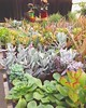Plant nurseries > therapy #succulents #cactus #plants #greentherapy