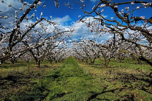 flowers trees france fruit fleurs plante landscape arbres paysage extérieur drôme fruitiers