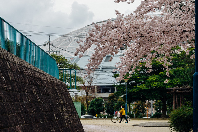 CherryBlossoms_206