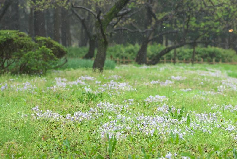 東京路地裏散歩 雨の日比谷公園 2016年4月7日