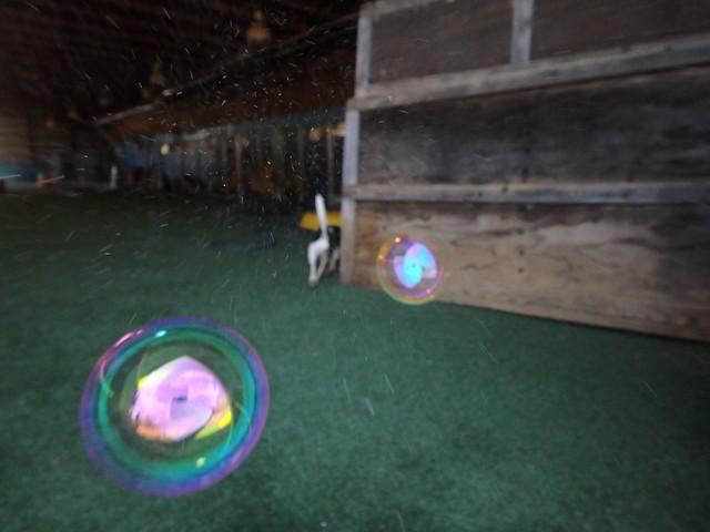 Bubble Play 4/17/16!