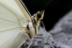 Papillons en Liberté 2016 - Photo 58