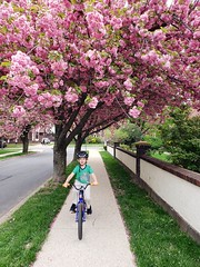 Everett Biking Under A Cherry Tree