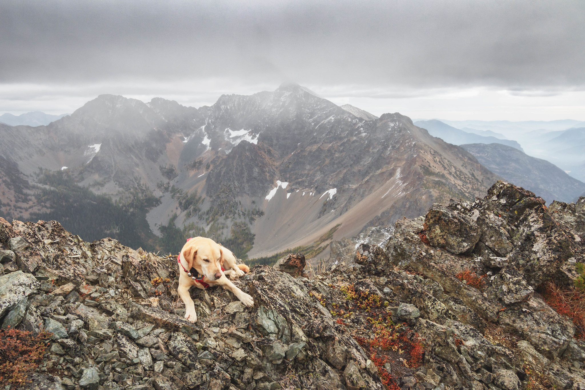 Summit dogs on Devils Peak 8081