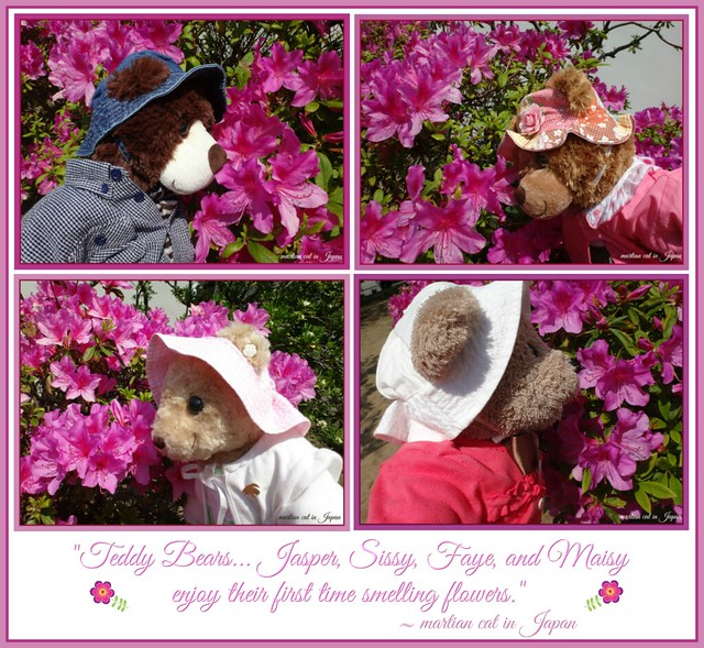"""Teddy Bears... Jasper, Sissy, Faye, and Maisy enjoy their first time smelling flowers."""
