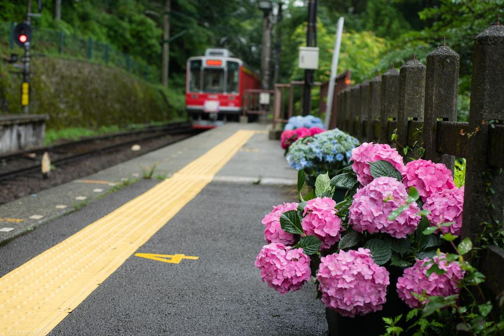 2018-06-15 箱根登山鉄道と紫陽花 007-2