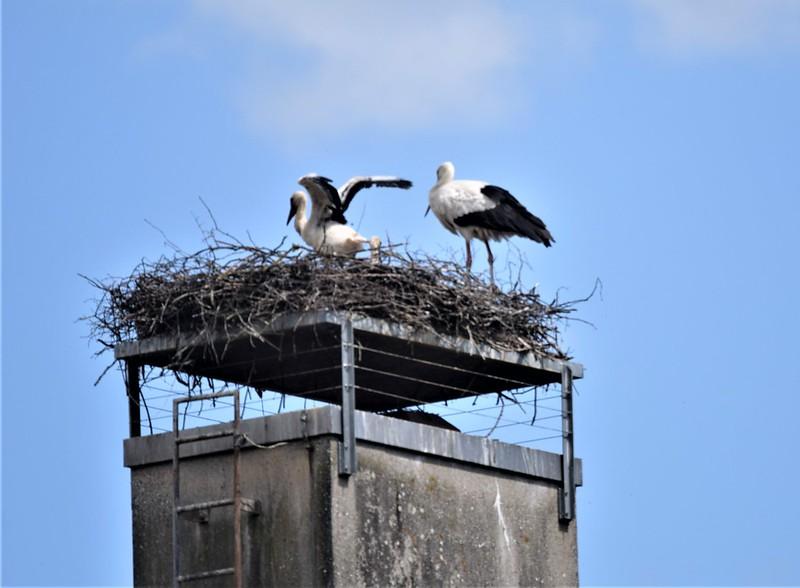 Stork 02.06 (8)