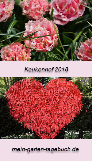 Keukenhof 2018