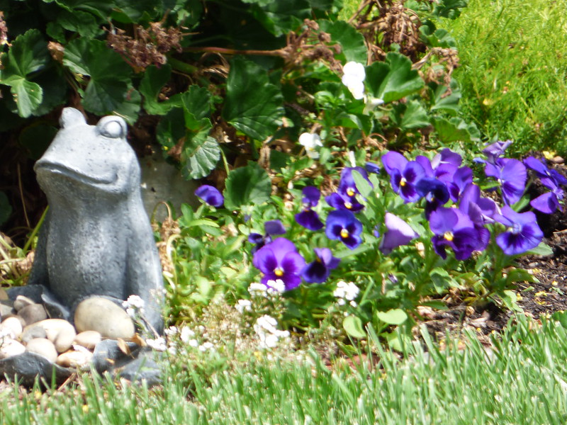 2018-06-17 - Garden things in front of our house