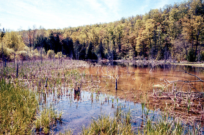 The Marsh at Mono Cliffs Two