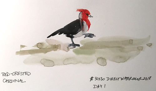 180601 Red crested cardinal